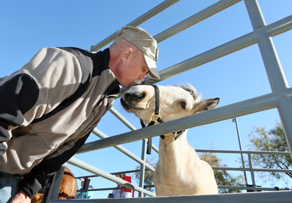 Mark Christianson (cq) gives a kiss to Darcy Annie, a 4-month-old buckskin filly, during an adoption event outside the Bureau of Land Management's Southern Nevada District Office Saturday, Dec. 19, 2015, in Las Vegas. Orphan wild horse foals that were rescued from drought-stricken public lands in Cold Creek near Las Vegas in September were available for purchase in a silent auction. (Ronda Churchill/Las Vegas Review-Journal)